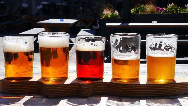 Pivní odrůdy