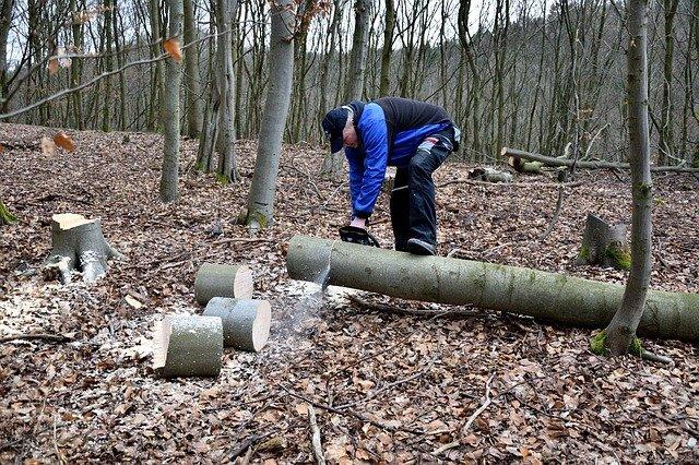 dřevorubec s pilou