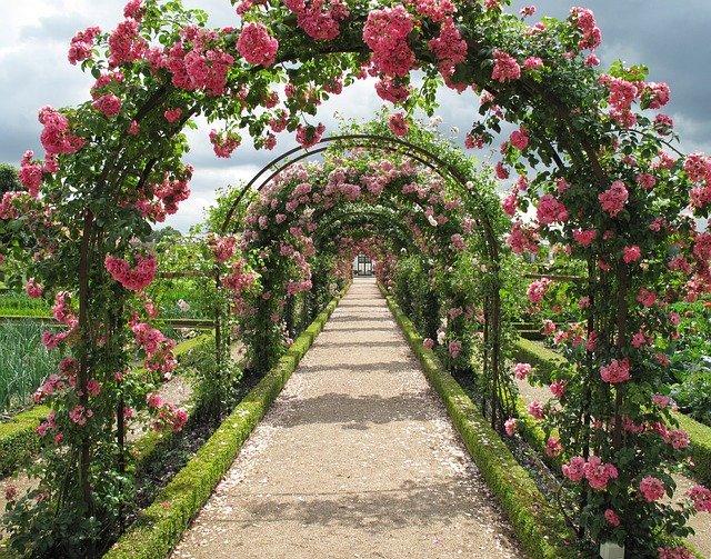 růže na obloucích