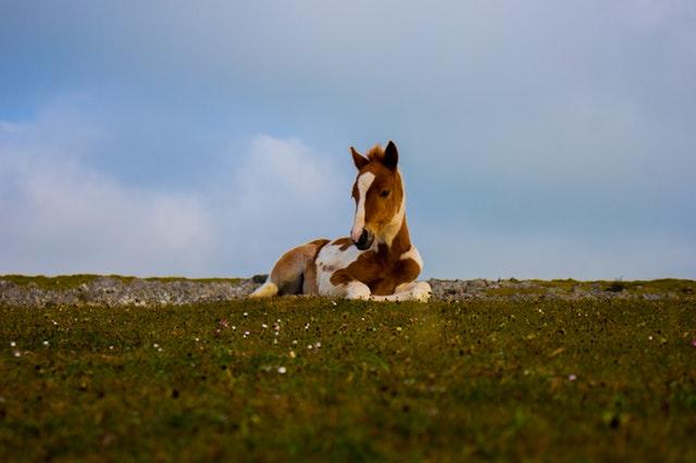 roztomilý kůň